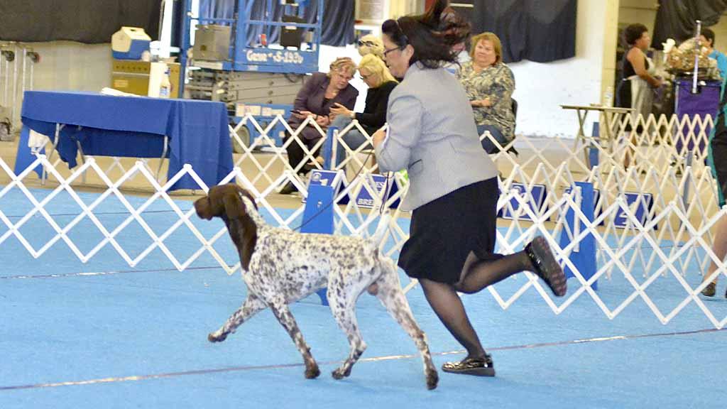 Welsh Kc Dog Show