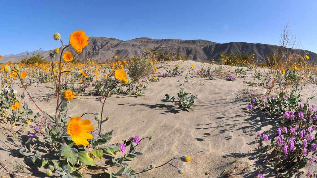 Forecasters Warn of Extreme Heat in San Diego County