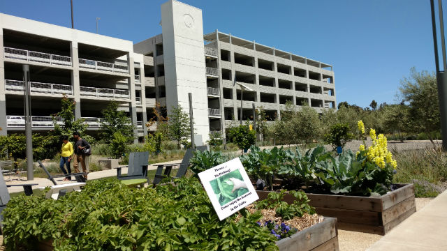 The organic garden at Qualcomm Technologies' Pacific Center Campus. Photo by Chris Jennewein