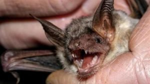 Bat pictured on San Diego County News Center site. Photo via PhotoSpin.com