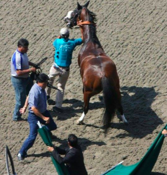 Horse at Del Mar Fair. Photo Credit: Ellen Ericksen