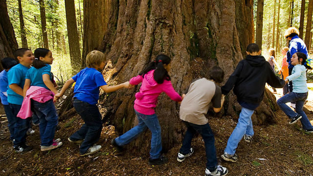 Elementary school students circle around a giant redwood tree. Courtesy California State Parks