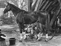 """Mickey Rooney and Elizabeth Taylor in """"National Velvet."""" Photo via Wikimedia Commons"""