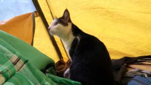 Michelle the cat shared a tent with Julie Pendray during Pacific Crest Trail trip. Photo by Julie Pendray