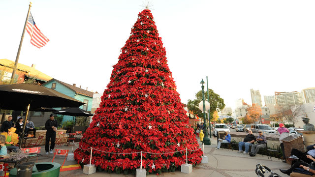 little italy 39 s poinsettia christmas tree ranked among most 39 dazzling 39 in u s times of san diego. Black Bedroom Furniture Sets. Home Design Ideas