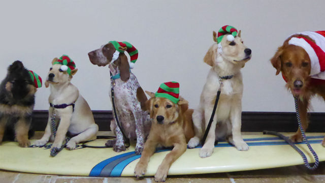 Santa Paws puppies spread Christmas cheer to veterans with PTSD. Photo Via Paws'itive Teams.