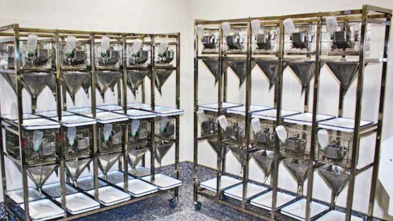 Vivarium cages at BTS Research. Photo via btsresearch.com