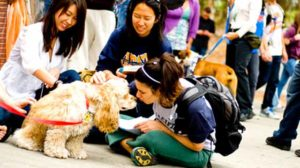 """UCSD students interact with dogs at 2015 """"Therapy Fluffies"""" event. Photo via ucsdnews.ucsd.edu"""