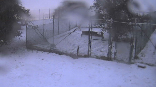 Snow on Saturday morning at the California Wolf Center near Julian. Courtesy UCSD HPWREN network