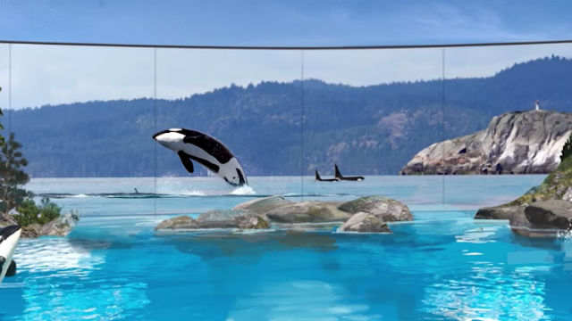 SeaWorld's new exhibit 'Orca Encounter' will focus on presenting the orcas in the an environment resembling nature. Photo via SeaWorld's YouTube.