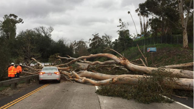 During the height of the storm, a eucalyptus tree fell across Route 163, crushing a car and snarling traffic. Courtesy San Diego Fire-Rescue