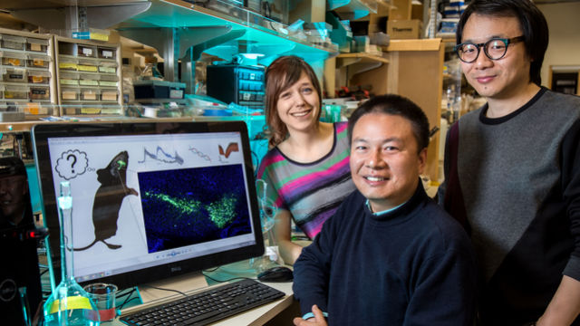 Salk researches Claire Geddes (left), Xin Jin and Hao Li.