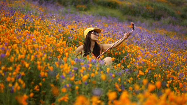 Sdg E San Diego >> Biggest Wildflower Bloom in Years Sets Southern California Ablaze in Color - Times of San Diego
