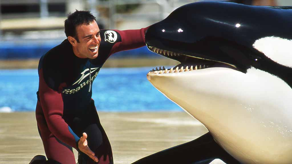 One of SeaWorld's oldest killer whales dies