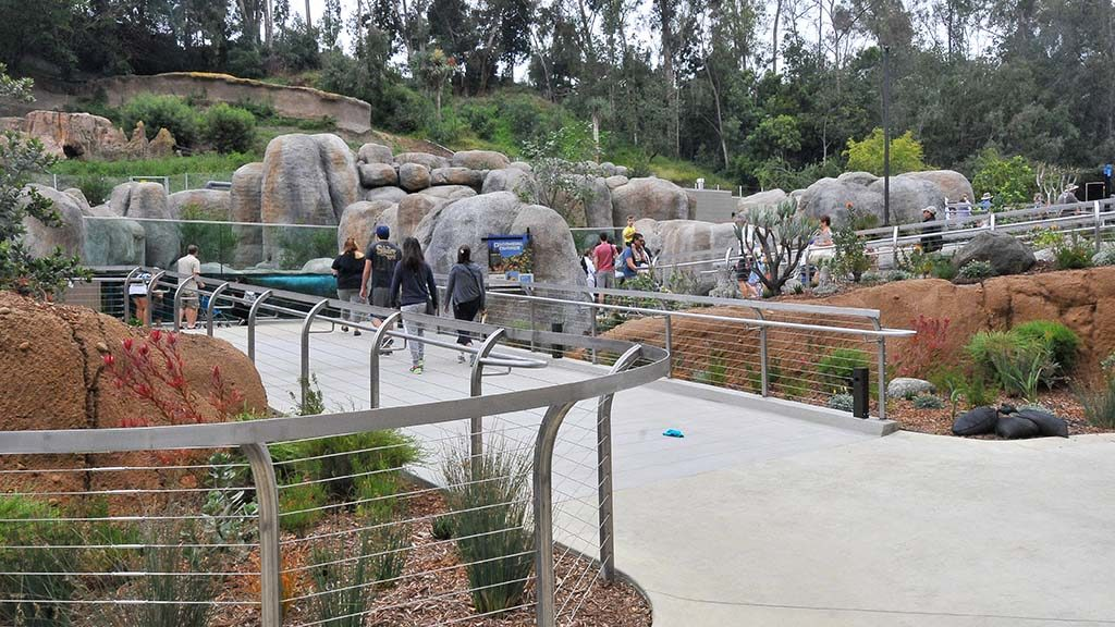 hundreds make zoo dash at africa rocks opening times of san diego