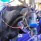 Race horse Arrogate