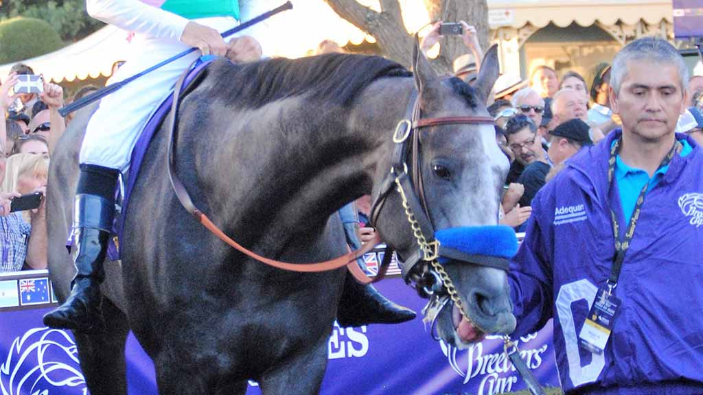 Rematch set for Arrogate, Accelerate