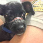 Rescued Santee Puppy