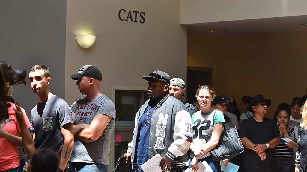 Nearly 900 people showed up at the San Diego county animal shelter on Gaines Street by 1:30 p.m. to check out animals on national Clear the Shelters Day.