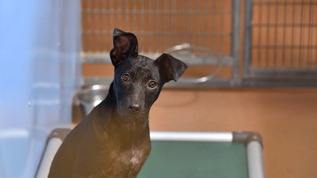 A dog listens as a parade of visitor checks out dogs, cats and rabbits at the San Diego animal shelter.