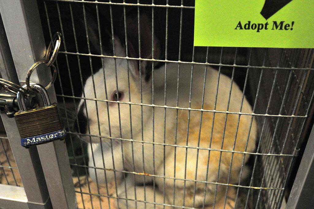 Rabbits were among the pets up for adoption at the San Diego County animal shelters.