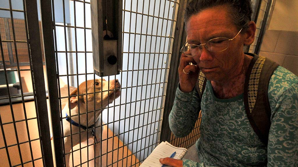 Shannon Castro of San Diego plugs one ear as Judy the pit bull barks. Castro chose to take Judy home.