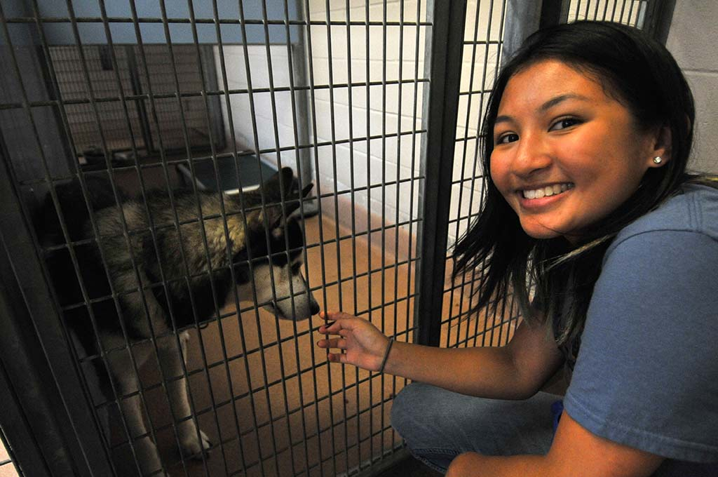Alexandra Fernandez picked a Husky for her parents because it resembled a wolf.