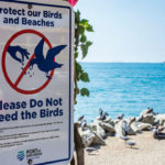 Don't feed the birds sign