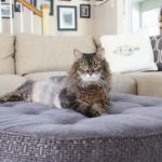 La Mesa cat