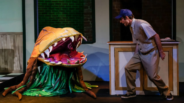 "Connor Boyd as Seymour Krelborn in ""Little Shop of Horrors"""