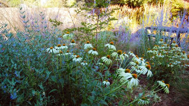 California garden in September