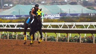 Trainers and exercise riders get horses used to the track.