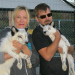 Amy and David Bassett with two of their domesticated Russian foxes