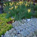San Diego Botanic Garden plant sale