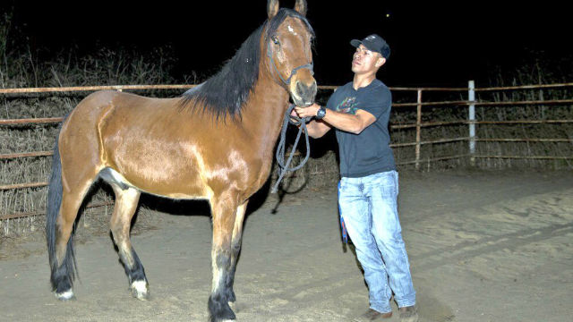 Race horses killed by Southern California wildfire