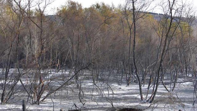The Lilac fire swept through areas in Bonsall.