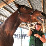 Barbara Laurito of Bonsall comforts her horse Wyoming