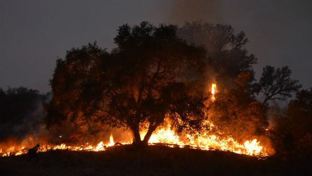 Trees burn in Thomas Fire
