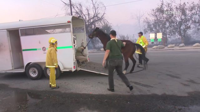 Horse evacuation