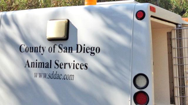 Animal services vehicle
