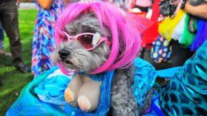 Ruffy, aka Sir Ruffles von Vicious, plays a mermaid in the costume contest.