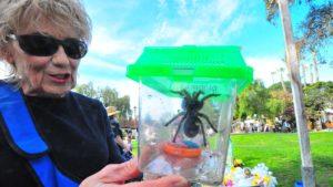 Sharon Everett, a retired elementary school teacher, brought 17-year-old Chilean Rose tarantula, Stella.