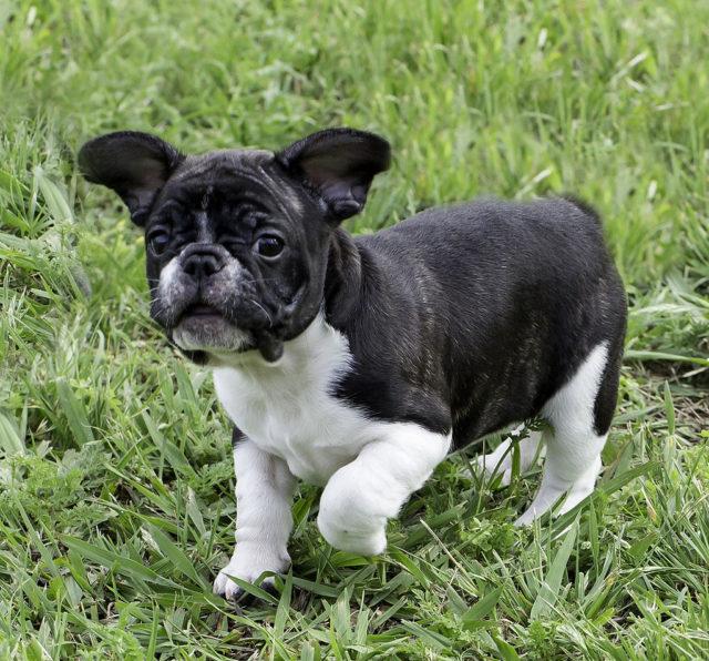 Coronado Dog Park Initiative Brings Tail Wagging Snarls