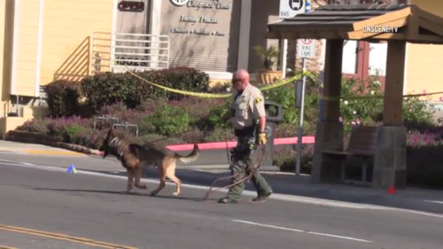 deputy and K-9 in street