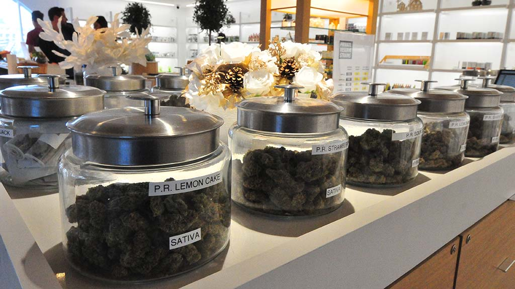 Apothekare in Misssion Valley displays different strains of pot for customers can compare aromas.