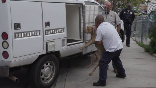 Pit bull loaded into truck