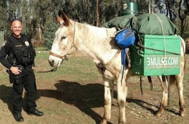 Little Girl mule
