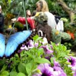 Butterfly Jungle at San Diego Safari Park opened to visitors eager to interact with the insects.