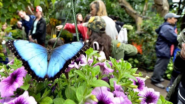 San Diego Zoo, Safari-Park Geschlossen Bleiben, Mitarbeiter Bezahlt, Fügt Schmetterlings-Dschungel-Cam