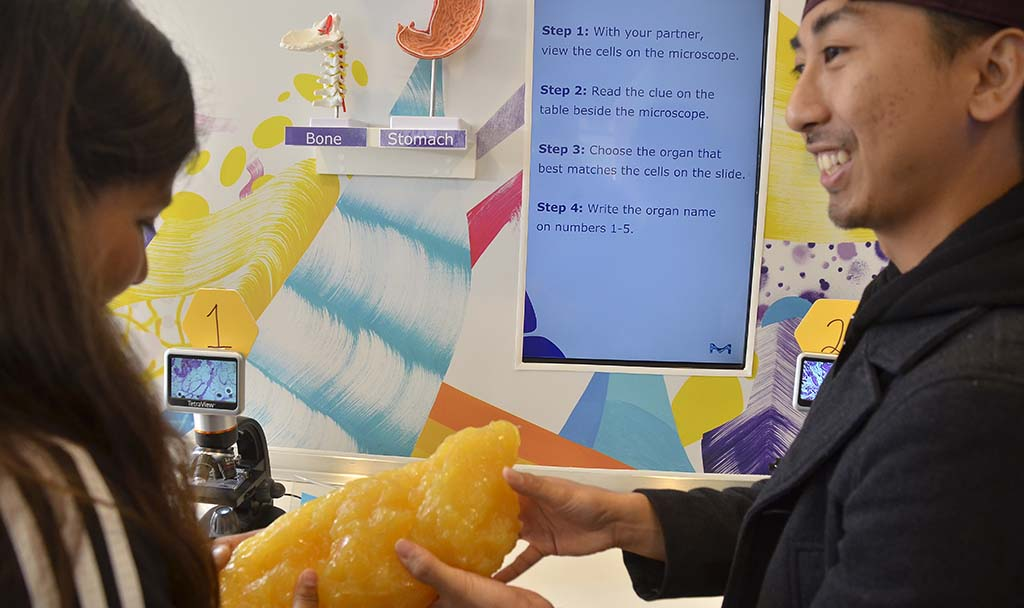 A woman gets a look at the consistency of fat in the Curiosity Cube at EXPO Day.